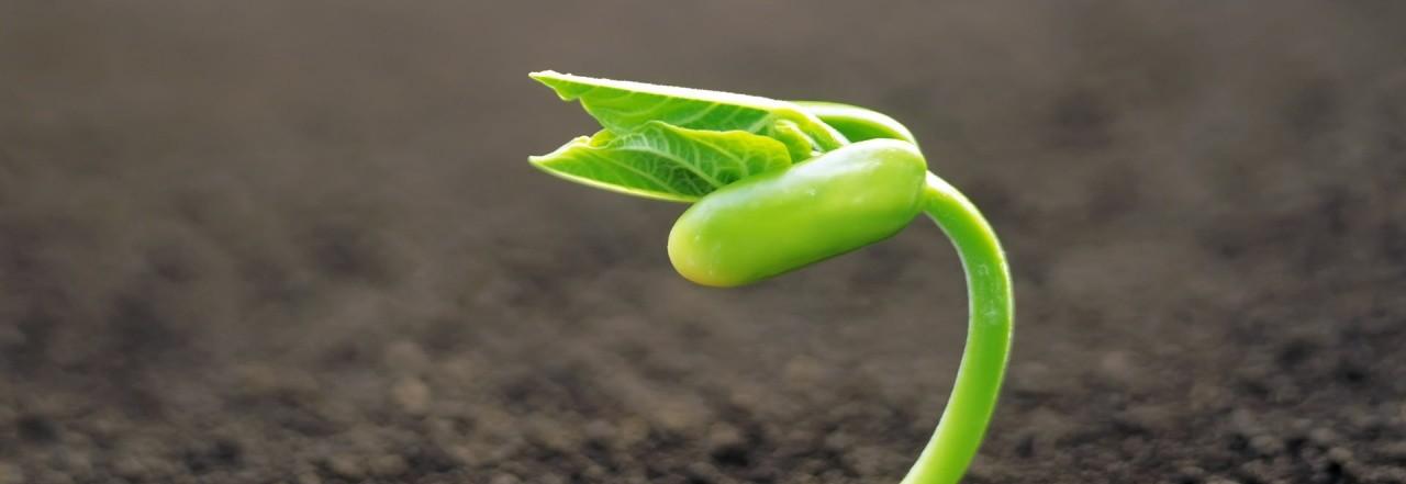 De la semilla plantada por dios en los corazones for Plantar hortensias semillas