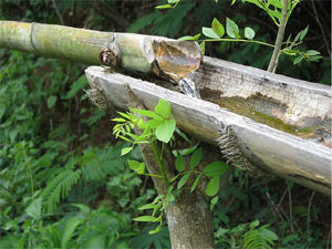 bambou-irrigation