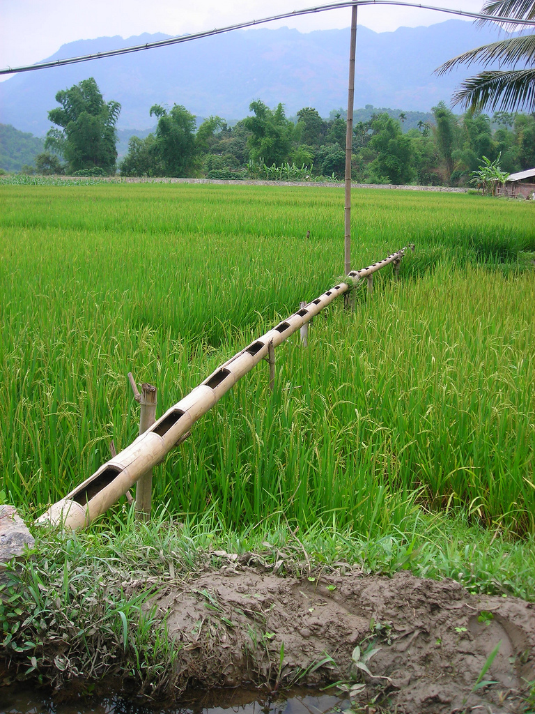 irrigation-with-bamboo