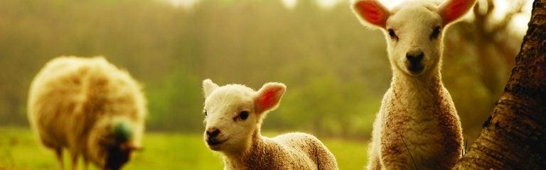 El silencio de los corderos (2)